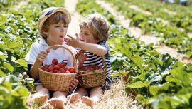 Erdbeertaler